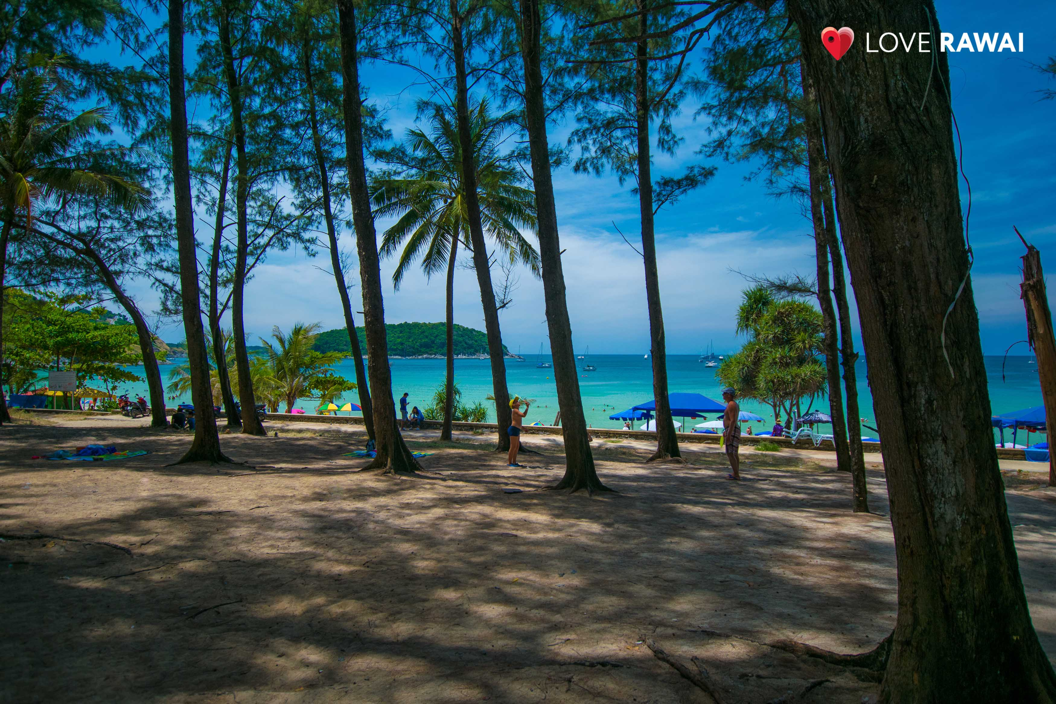nai harn forest